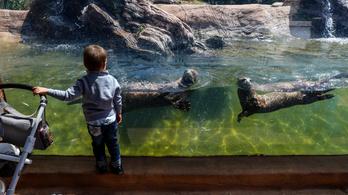 Ujhelyi: nyissanak ki az állatkertek!