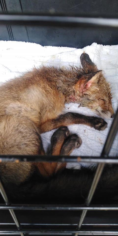 Forrás: Facebook - Civil Debreceni Állatvédők