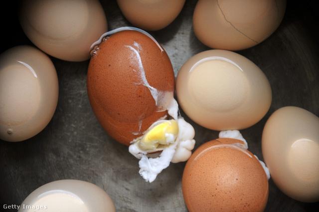 miért van több pénisz mint tojás
