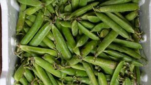 Kimagasló lesz az idei termés, lejjebb mehet a zöldborsó ára