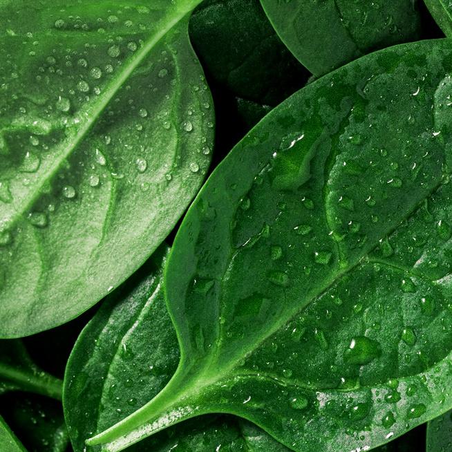 Immunerősítő, csökkenti a vérnyomást és tele van vitaminnal – 6 nyomós érv a spenót mellett