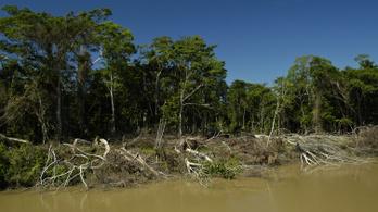 Illegális magántulajdonban van az Amazonas brazíliai esőerdeinek negyede
