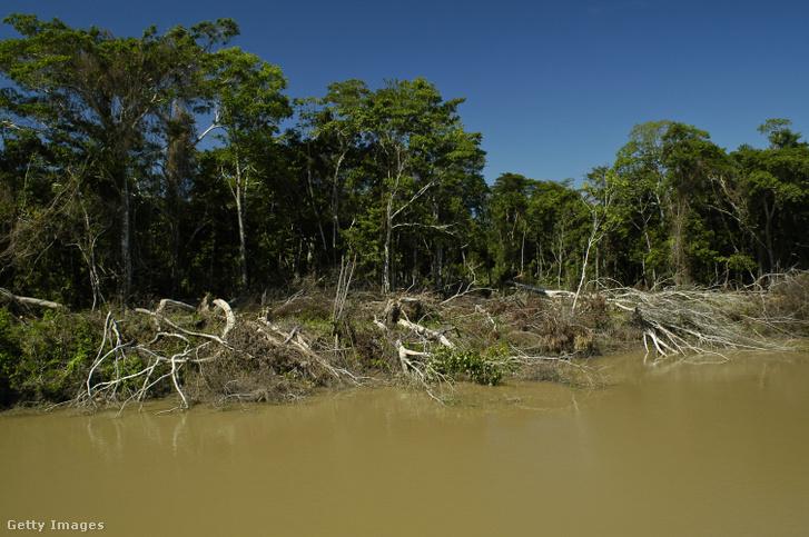 Illegális erdőirtás nyomai az Amazonas brazíliai esőerdejében