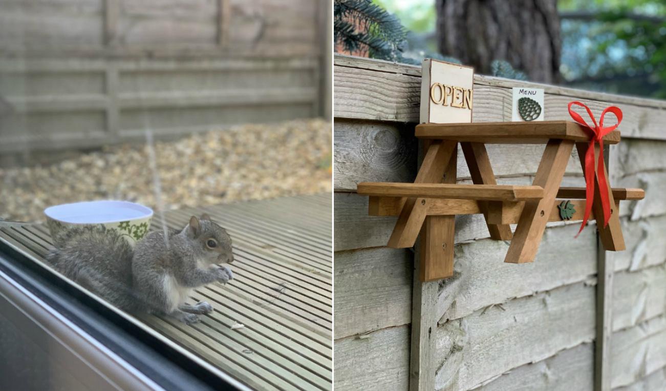 mókus nyitó
