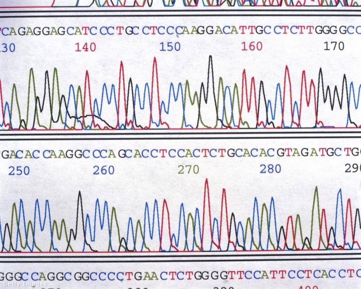A Humán Genom Projekt egy kromatográfiája, amely bizonyos ismert gének pozícióját jelöli.