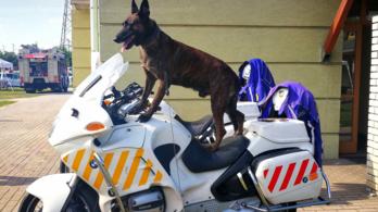39 szolgálati kutya segítségével több százmillió forint értékű árut foglalt le a NAV tavaly