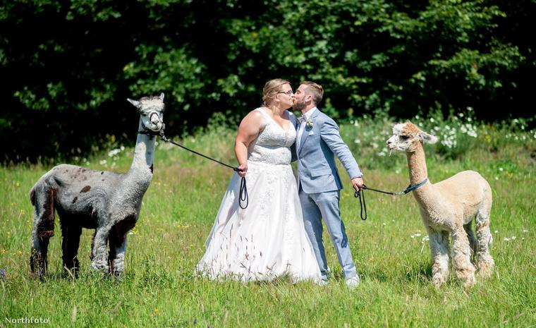 Na de félre a béna viccekkel, mert ennyire jópofa képek születtek az ifjú párról az alpakás esküvőn.