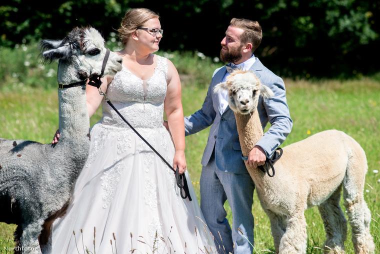 Ha mást nem is szűrhettünk le ebből a lapozgatóból, az mindenképpen kétségbevonhatatlan tény, hogy ezek az alpakák baromi aranyosak.
