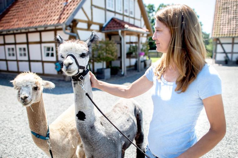 Ő Sabine Weinrich, ő az alpakafarm tulajdonosa.