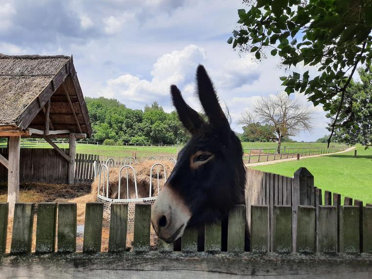 A programok előtt-után közvetlen közelről ismerhetjük meg a bugaci tanyavilág állatait