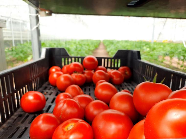 A lakitelki Népfőiskola zöldség- és virágkertészetben szintén fenntartható gazdálkodás folyik: az itt termesztett zöldséggel nemcsak a helyi igényeket szolgálják ki, de jut belőle a környező települések piacaira is