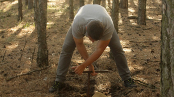 Föld alatti sivatagokat hoznak létre az esztelenül telepített erdők