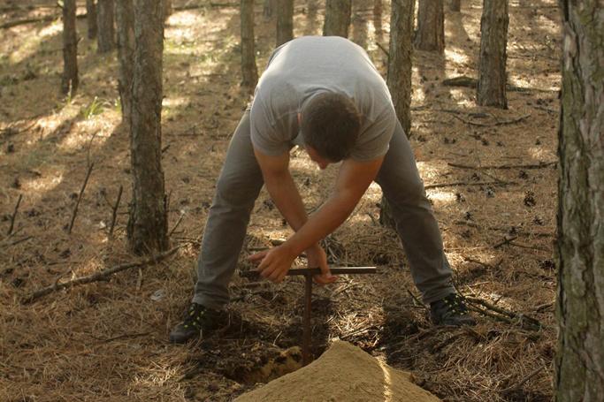 Tölgyesi Csaba talajfuratot készít egy fenyőültetvényben, Jól látható a mélyebb talajrétegekből felhozott száraz homok
