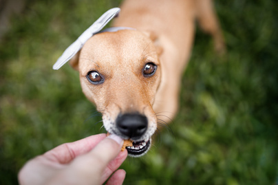 kutya-eszik