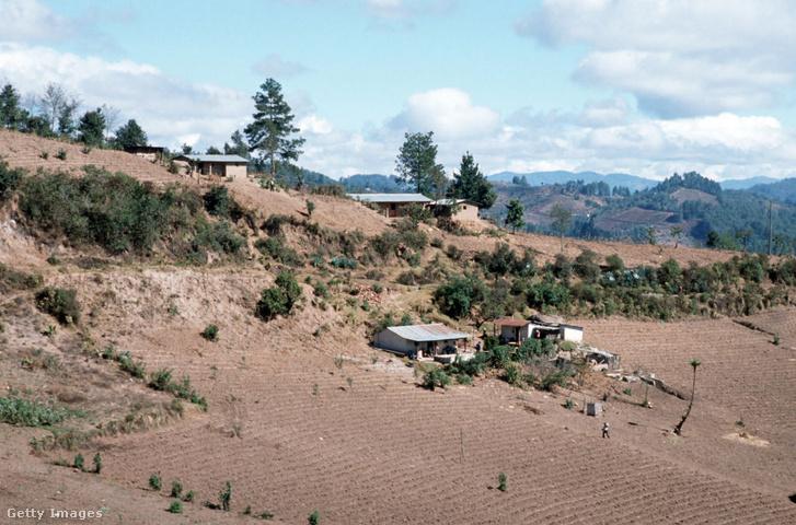 Guatemalai erdőirtás helyén létesített farm