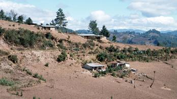 Guatemalában a drogkartellek irtják az esőerdőt