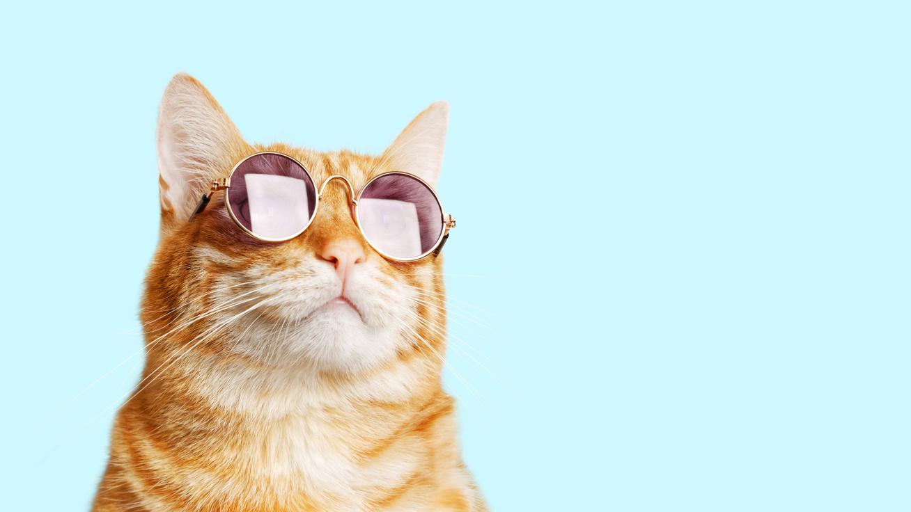 Nem rohadékok, sőt! – 15 érdekesség a macskákról