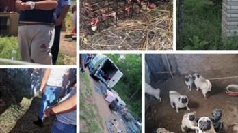 58 kutyát, 7 kecskét és 5 macskát mentettek ki egy nyírbogáti ingatlanról