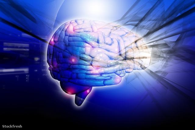 stockfresh 1225796 human-brain sizeS