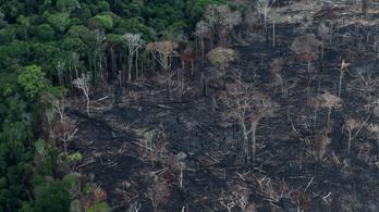 Legutóbb 13 éve lángolt olyan gyakran az amazóniai esőerdő, mint idén júniusban