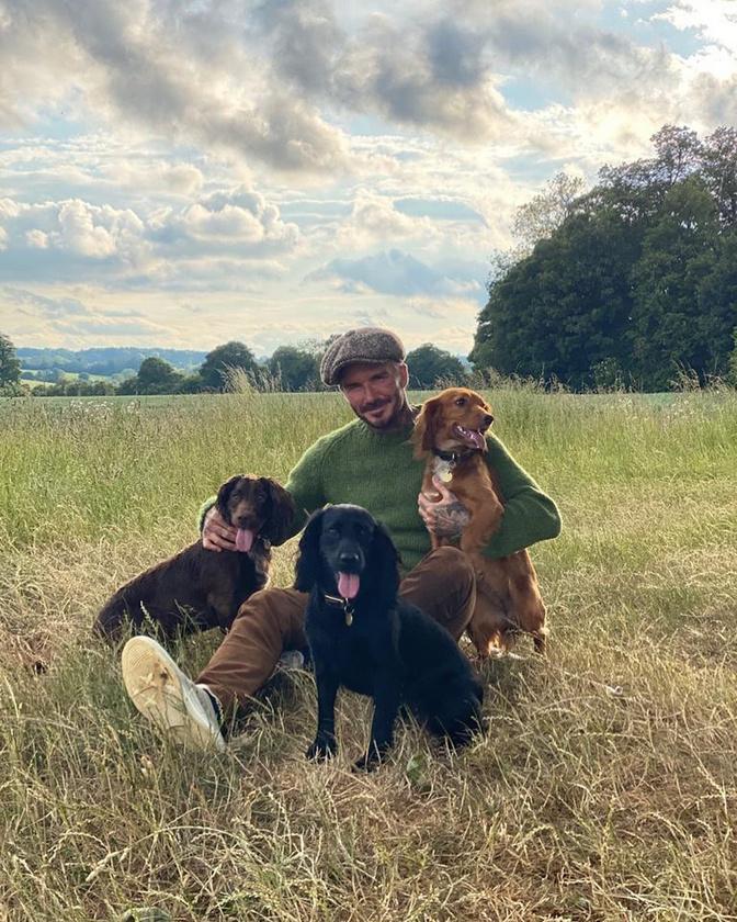 Na de mit érne a vidéki élet kutyák nélkül? Ebekből is van néhány, minden Beckham fiúra jut egy, ha jól számoljuk