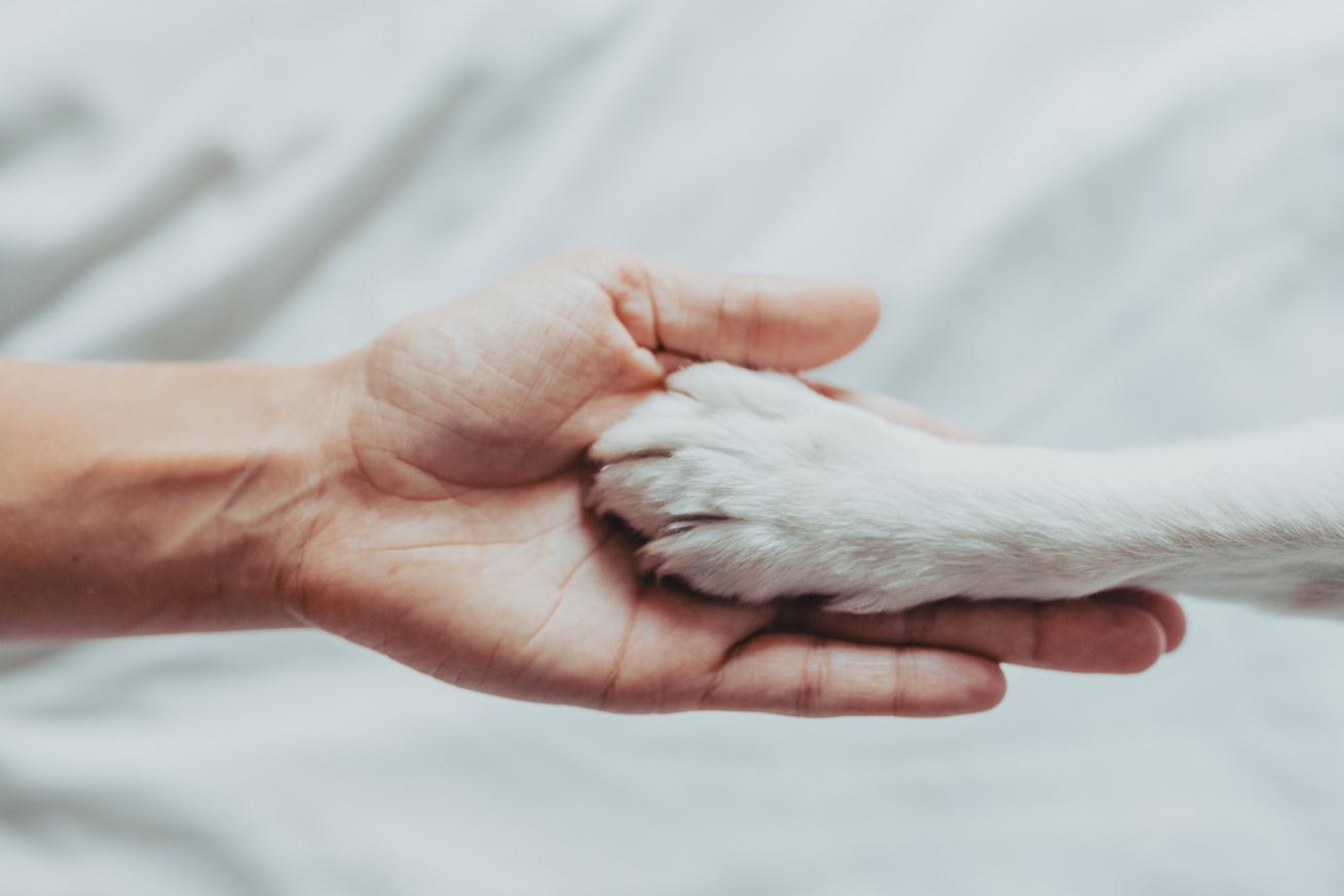 kutyatartás-boritó