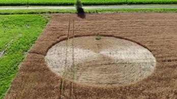 Valószínűleg nem kozmikus civilizáció üzenete a nagykanizsai gabonakör