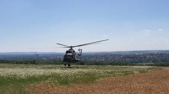 20 méteres fa tetején ragadt, majd lezuhant egy siklóernyős Vértesszőlősnél