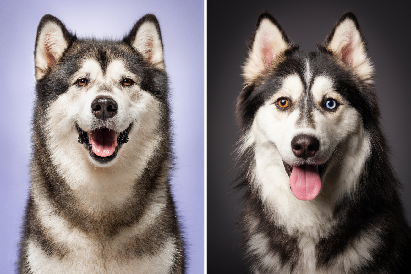 kutyafajtak