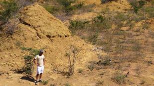Egy brazíliai termeszkolónia nagyobb területet foglal el, mint egész Anglia