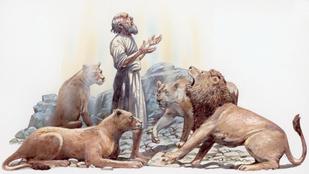 Hihetetlen: oroszlánok között töltötte az éjszakát ez a férfi