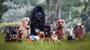 Melyik kutyafajták élnek a leghosszabb ideig?