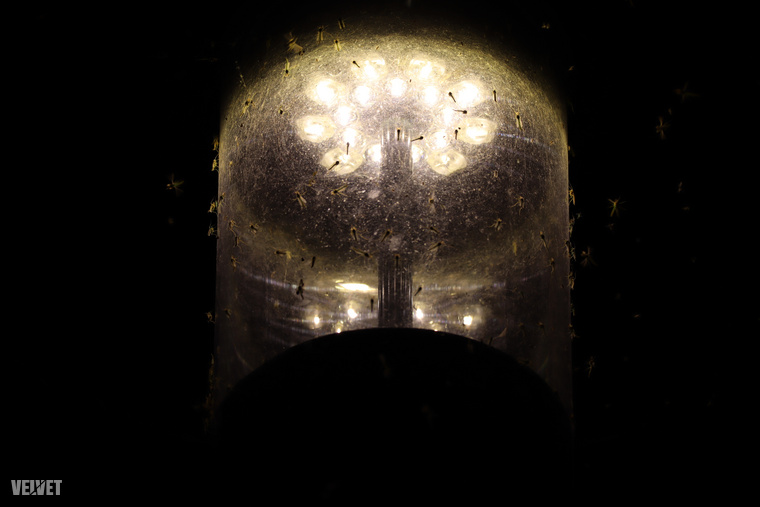 Minden lámpa körül hatalmas rajok zsonganak, olyan folyamatos zajjal, ami engem a metró távoli érkezésére emlékeztet.