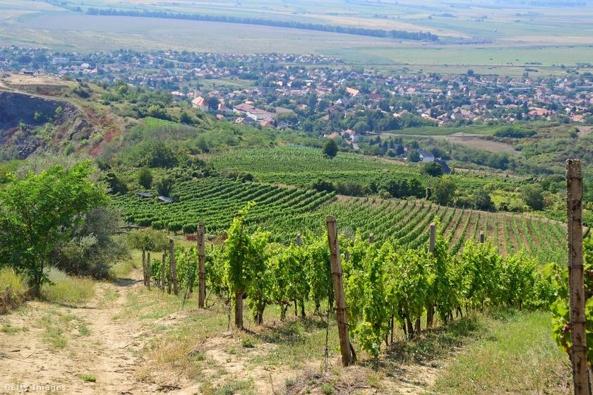 Tarcal a Tiszától nem messze, Tokaj közelében található apró község, mely megannyi látnivalót rejt, szőlődombjai, táji adottságai magával ragadóak. Az itt található azúrkék bátyatavat és a Szent Teréz-kápolnát mindenképpen érdemes megnézni.