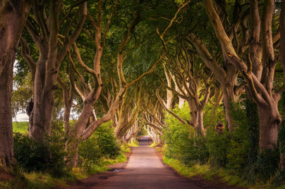 dark-hedges-2