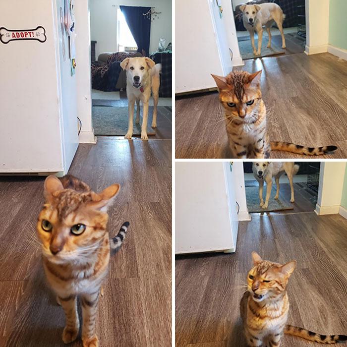 Sarah, a kutyám ellopott egy falatot Stella tálkájából, aki kirohant hozzám a konyhába, hogy elpanaszolja a gaztettet.