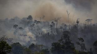 Idén is nagyon irtották az amazonasi esőerdőket