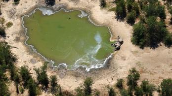 Egy új kórokozó okozhatja a rejtélyes elefántpusztulást Botswnanában