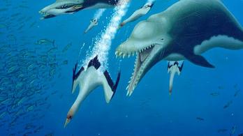 Gyilkos terrordelfinek pusztították az oligocén tengeri élővilágát