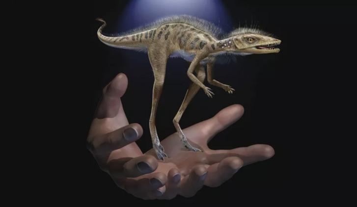 A Kongonaphon kely a paleontológus kezében (na jó, igazából nincs a kezében, ez csak egy fantáziarajz)