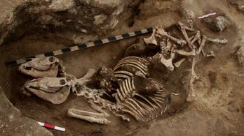 Több mint 3500 éve lovagolt az andronovói kultúra népe