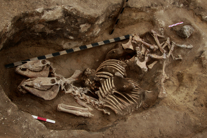 A lovak maradványai a kazahsztáni ősi temetkezési helyen