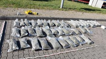 Több mint 50 kilogramm marihuánát talált egy kamionban a NAV