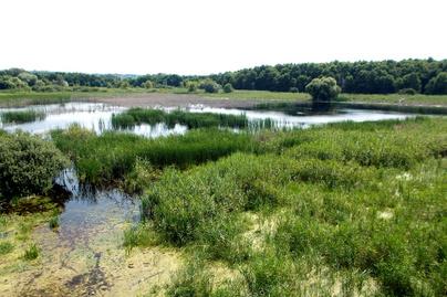 Merzse Marsh Nature Reserve, reeds, Rákoshegy, 2016 Hungary