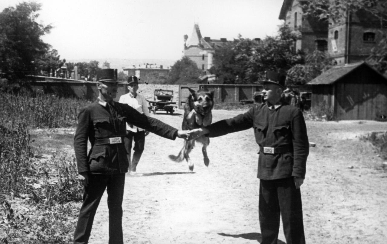 Kutyakiképzés a Mosonyi utcai laktanyában a két világháború között. A német típusú rendőrségi szférában (kulturálisan a magyar is idetartozott) a német juhász volt a bejáratott típus.