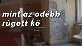 Gyurcsányék új videóklipet készítettek a Nélküled című számnak