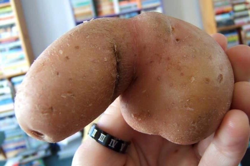 Ez itt egy szem krumpli.