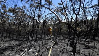 Több lehet a kihalófélben lévő állat az ausztrál bozóttüzek miatt