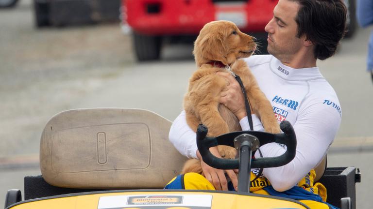 Egy kutya, ami meg van győződve arról, hogy emberként születik újjá
