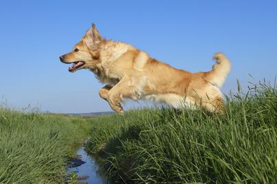kutya-fut
